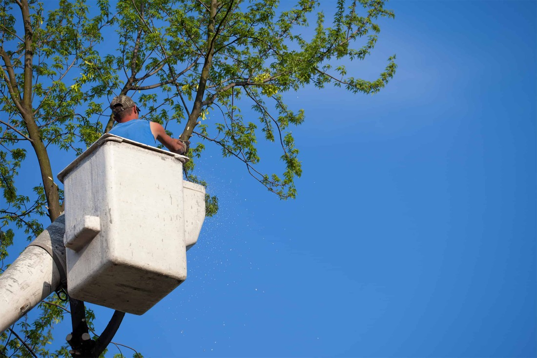 Sarasota Tree Removal - Bucket