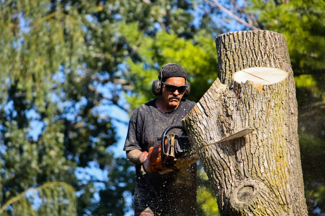 Sarasota Tree Removal - Cutting Tree